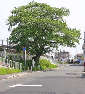 駅を南へ。町田街道