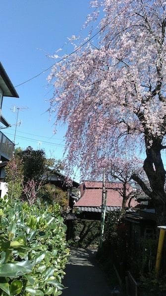 仄々鍼灸院までにみられる風景です|町田、相模原地域の仄々鍼灸院へご相談下さい。